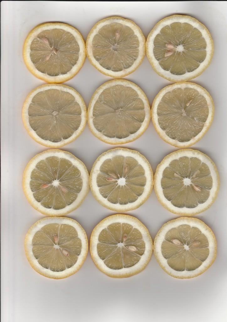 Zitronenscheiben mit Scanner fotografiert